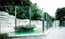 Die Vogelschutzverglasung des Freilichtsbereich der Eisbärenanlage: Tierpark Hellabrunn